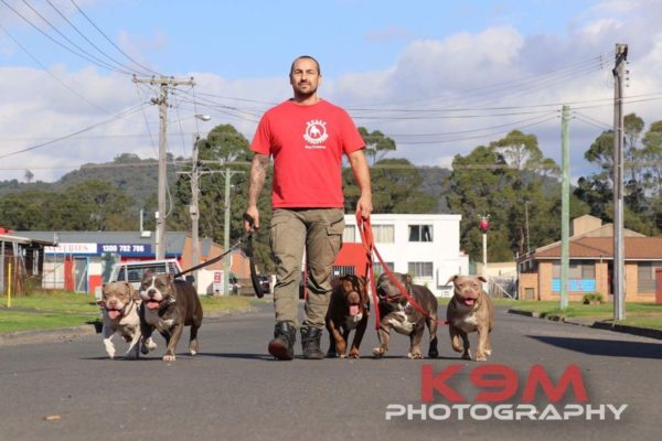 Dog Training Wollongong