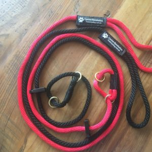 Slip Leash Halti Combo